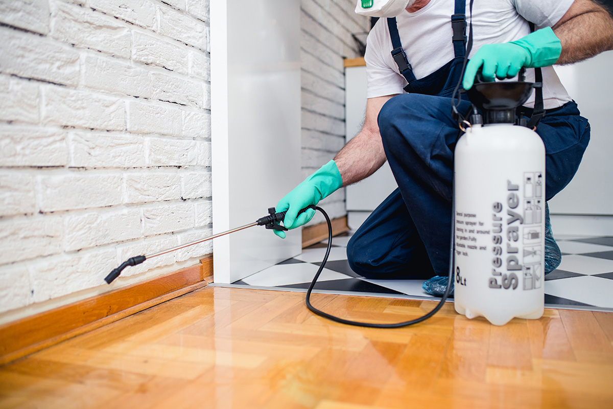 How to Start Your Own Pest Control Business With Ideas